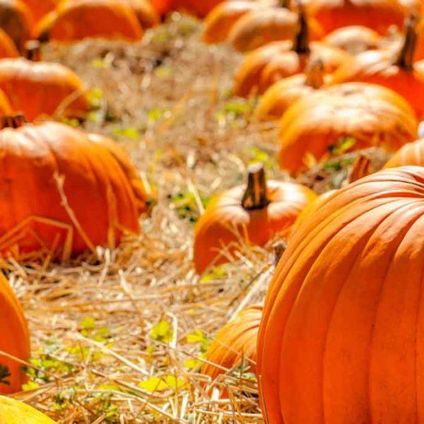 bg_pumpkins